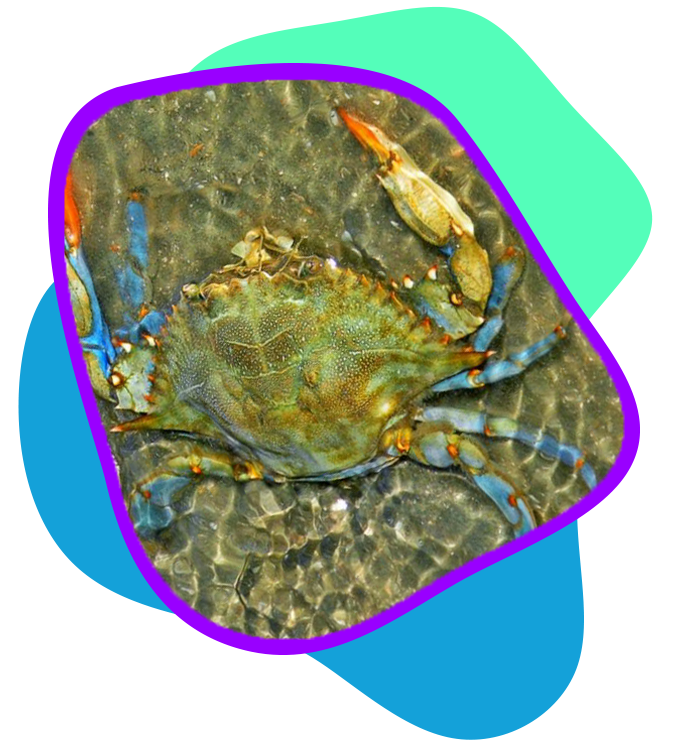 Hilton Head Crabbing Adventure