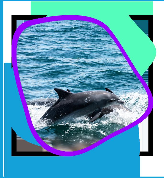 Hilton Head Dolphin Tours